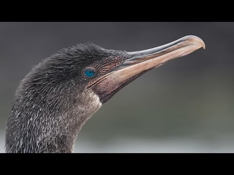 5 Most Unique Birds In The World!