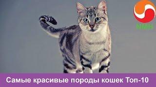 Топ 10 самые красивые кошки в мире-Самые красивые породы кошек
