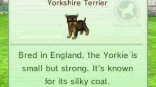 Nintendogs + Cats: Yorkshire Terrier (yorkie)