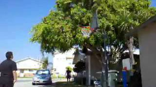 Baixar Matthew chavez makes a swish from over a tree :)