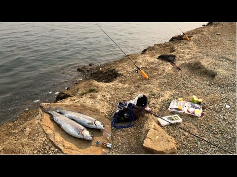 Los Vaqueros Fishing By The  Rock Wall |NIce Lassen Fish