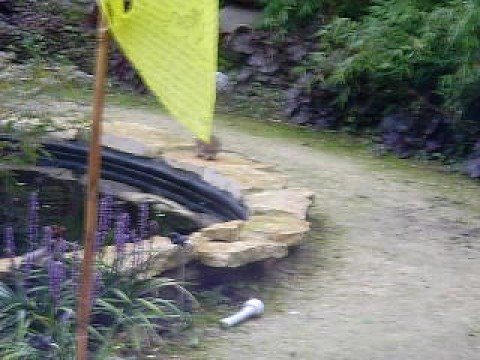 Wild rat my koi pond youtube for Runescape koi pool