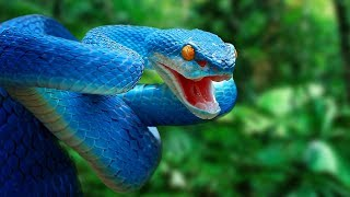 most-amazing-snakes-in-the-world