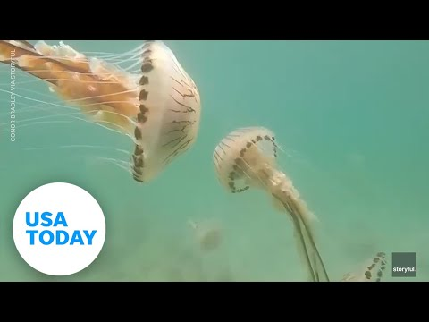 Jellyfish swarm a teacher off the coast of Ireland | USA TODAY