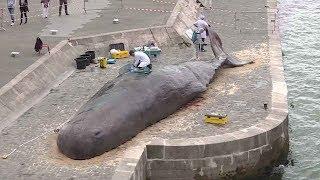 Sacrebleu! Sperm whale washes up in Paris?