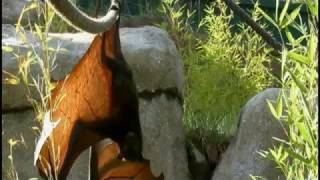 Cool Critters: Fruit Bats - KQED QUEST