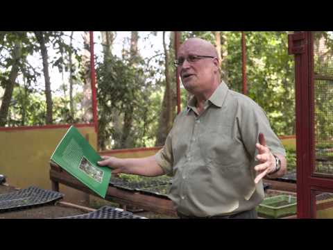 A how-to guide to restoring tropical forest