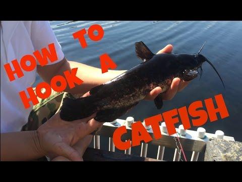 Animal Discoveries S1 E7: Backyard Fishing