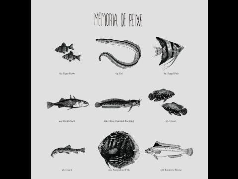 Memória de Peixe - Memória de Peixe (2012) [FULL ALBUM]