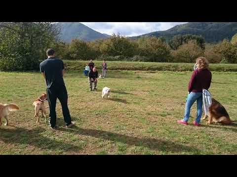 Clases de Obediencia Canina Urbana - Animals Brunyola