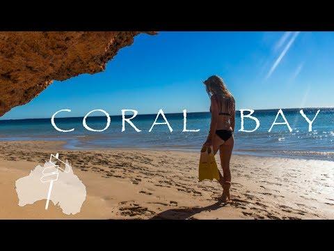 Überall Stachelrochen - Schnorcheln am Ningaloo Reef l Work and Travel Australien #23
