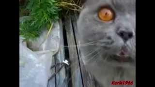 Кошачье караоке