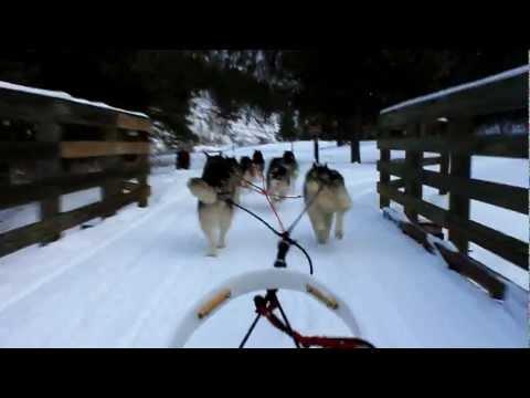 Sled Dog Ride