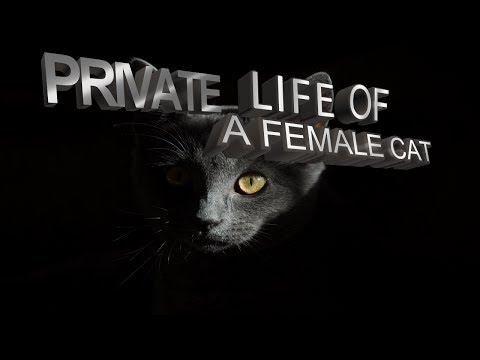 Private Life of a Cat - study of a female cat documentary