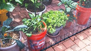 My Container Garden | Early July 2015 (update)