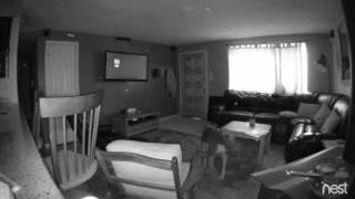 Spirit Orbs caught on Nest Cam