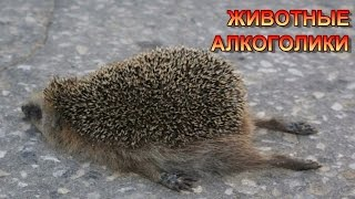 ЖИВОТНЫЕ АЛКОГОЛИКИ/ANIMALS ALCOHOLICS