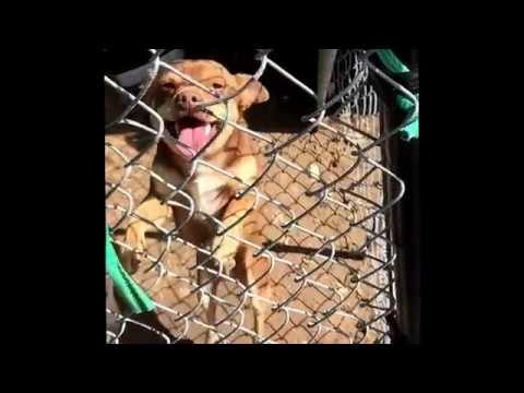 Cute chihuahua jumping a fence in slow motion