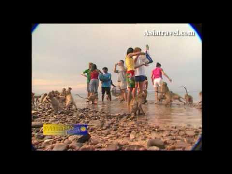 Monkey Feeding, Pattaya by Asiatravel.com