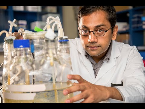 Environmental Engineer Kartik Chandran, 2015 MacArthur Fellow