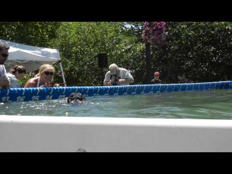 Dog Diving Competition Reno,Nevada, June 2012