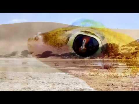 Lagarto del Gecko de la arena del Namib o salamandra rosada de la arena