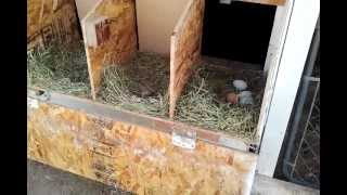 Chicken Coop Nest Boxes (easy Access And Easy Clean)