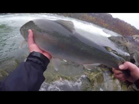 Niagara River Fishing Oct 25 2017 - Steelhead / Salmon