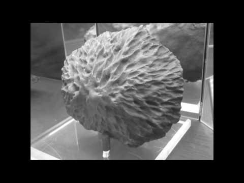 The Chrysanthemum Stone Meteorite