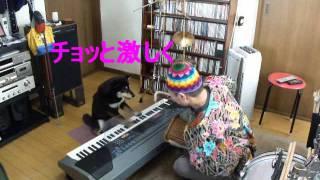 柴犬dondonちゃん (アフリカンスタイルのジャパニーズサウンドの巻か?)