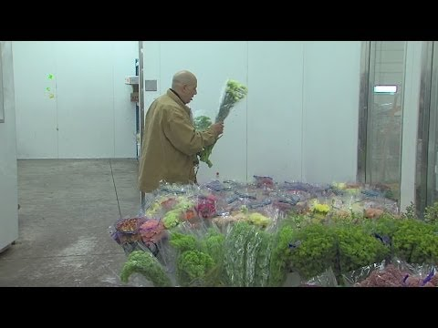 Live on Five: Cleveland Plant & Flower Co. is still blooming every day after 100 years of spreading