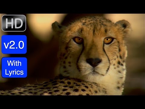 "NEW! Version 2.0 (with Lyrics): ""Creation Calls"" Worship Music Video in 1080p"