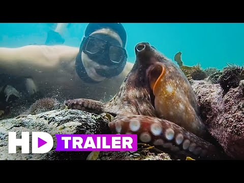 MY OCTOPUS TEACHER Trailer (2020) Netflix A filmmaker forges an unusual friendship with an octopus living in a South African kelp forest, learning as the animal shares the mysteries of her world., From YouTubeVideos