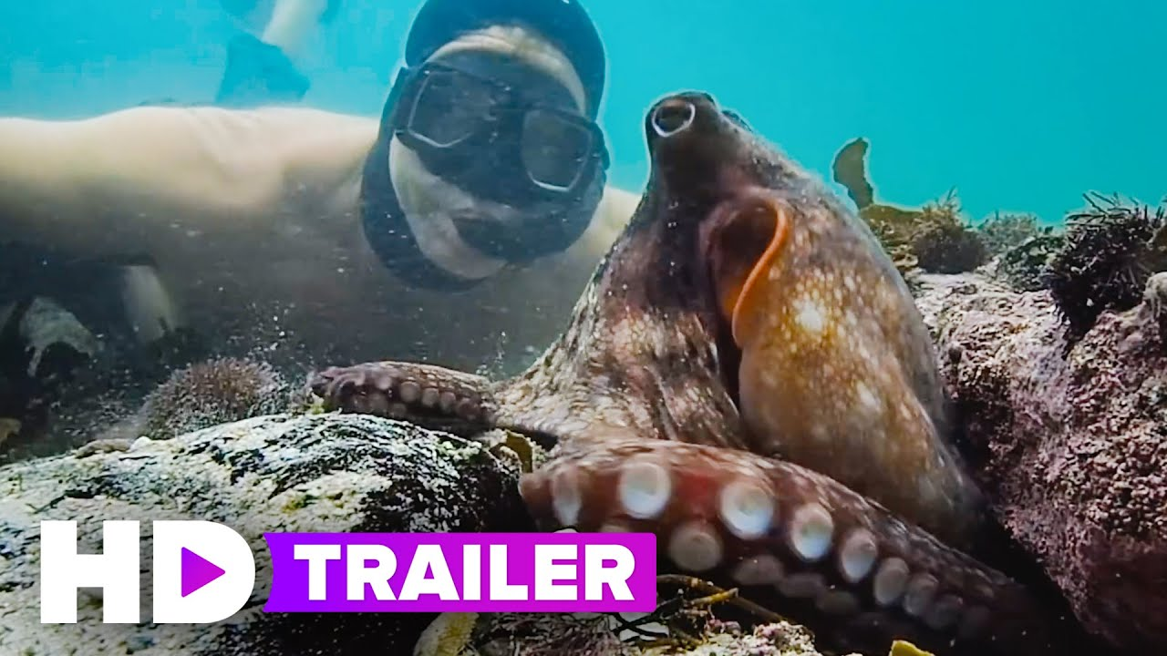 MY OCTOPUS TEACHER Trailer (2020) Netflix