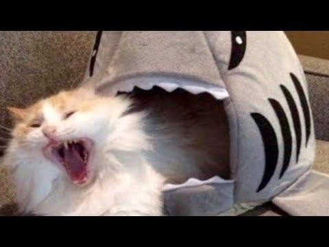котик зевает в корзинке в виде акулы