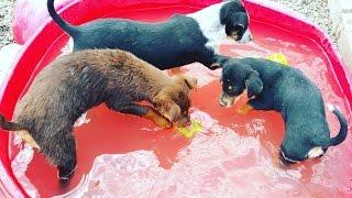 Rain's Pups - Talia, Tulie, & Reva! Adoption Video