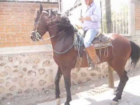 caballo LUCERO, en venta Morelos Mexico - YouTube