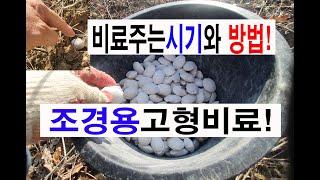 나무 식물 식생의 복합비료주는시기와 방법