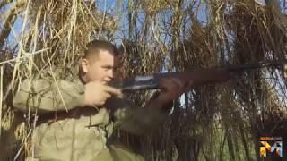 Особенности охота на лося в Беларуси