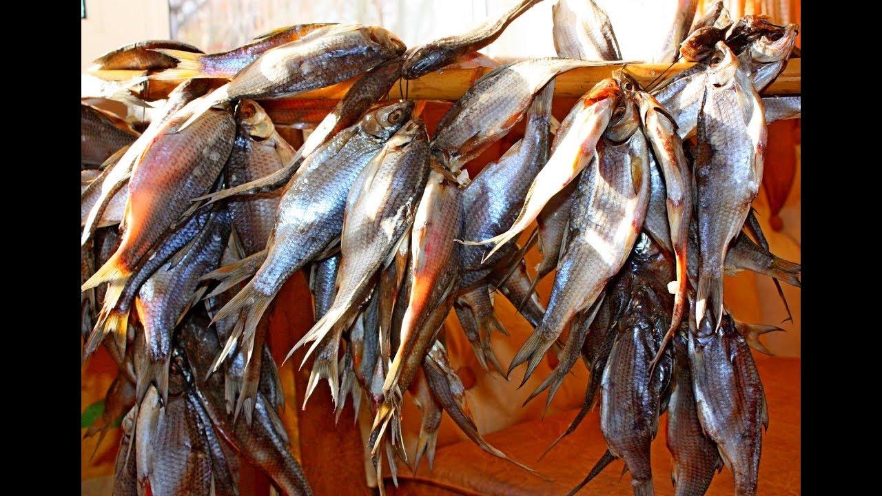 Как правильно сушить Рыбу. Как вкусно завялить плотву. Самый простой способ