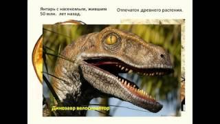доказательства эволюции животных 7 класс презентация
