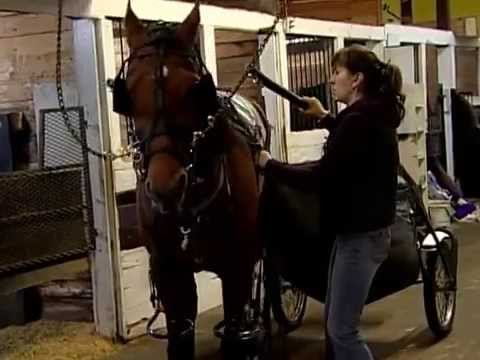 Here's A Surprise, It's Not That Easy Getting A Horse Ready To Race