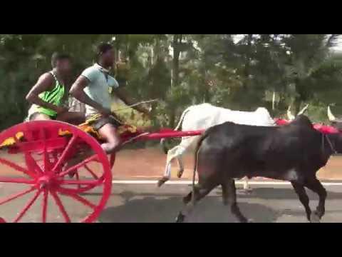 Theni chinnamanur #rekla race 2018