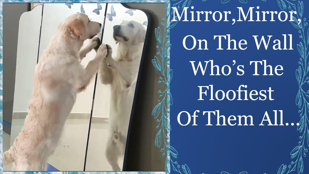 Dog mirror play | Om Reacts to his reflection in mirror ...