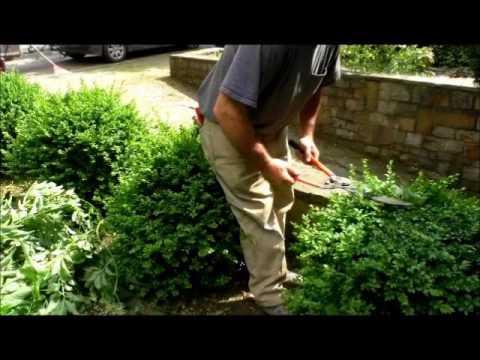 entretien de jardin youtube