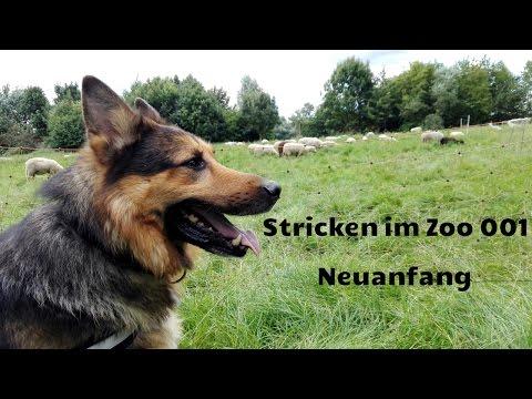 Stricken im Zoo #001 : Neuanfang
