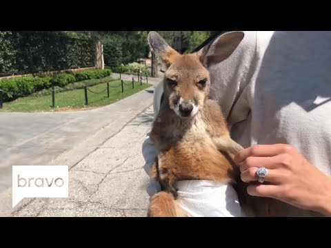 RHOD: Get Up Close And Personal With That RHOD Kangaroo (Season 3, Episode 7) | Bravo