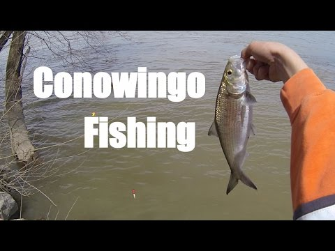 Conowingo Fishing April 2015