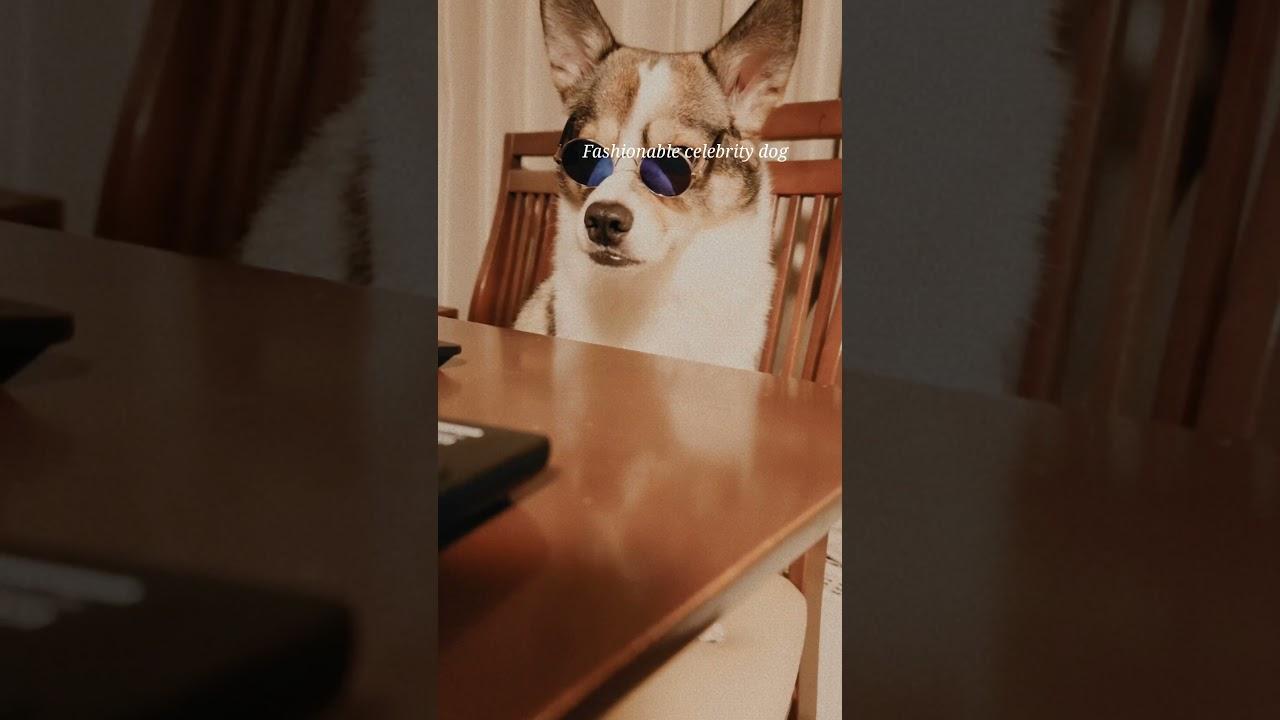 山で保護した保護犬がセレブ犬へ#shorts