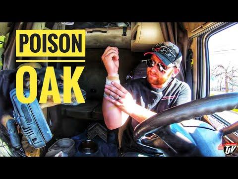 My Trucking Life | POISON OAK!!! | #1708